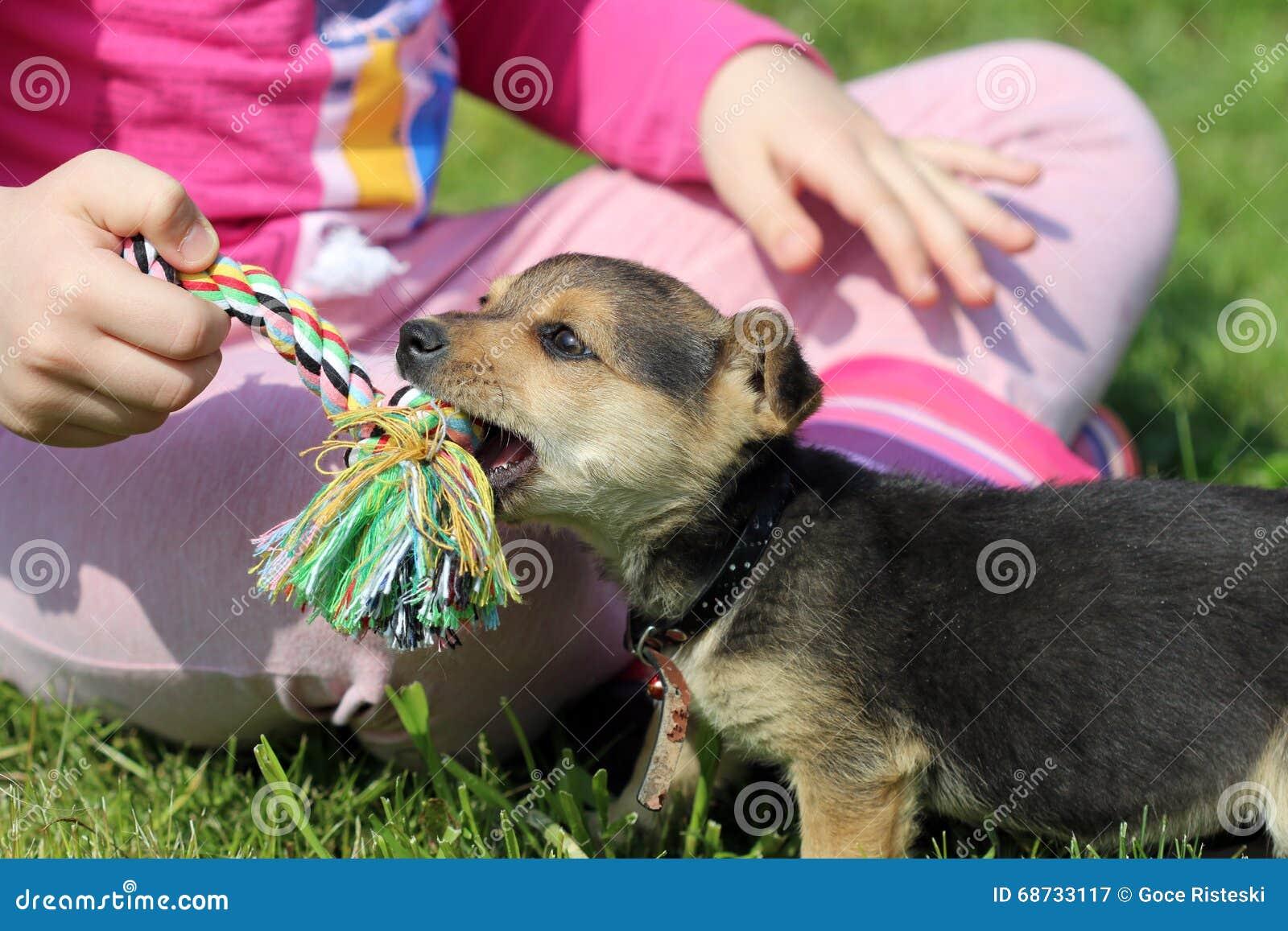 Welpe und Kinderspiel mit Seil