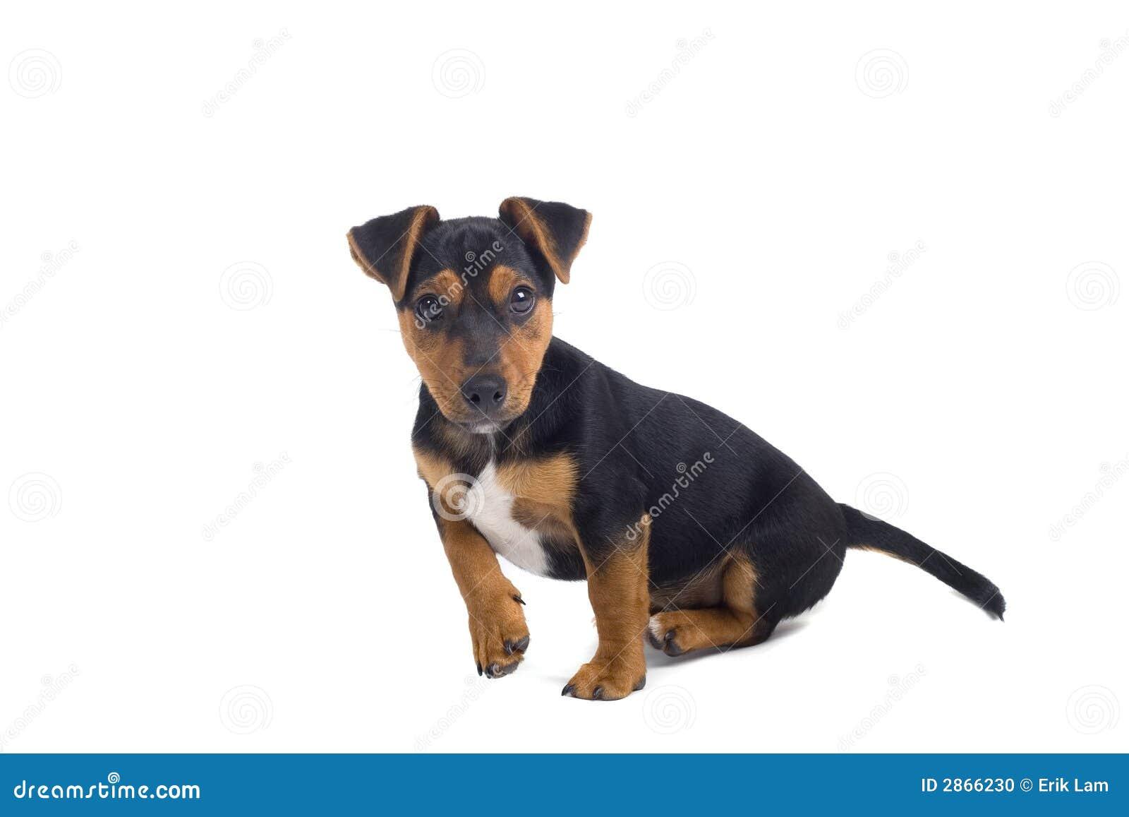 Welpenhund