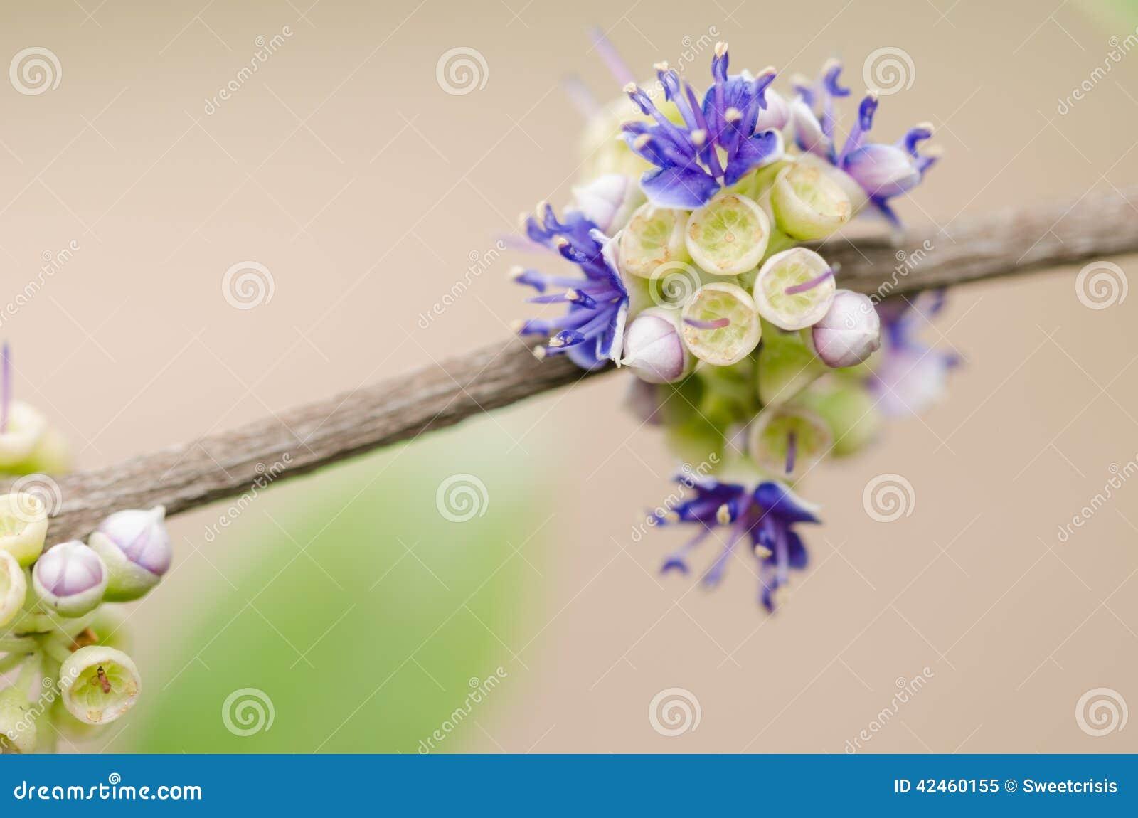 Wenig Blume