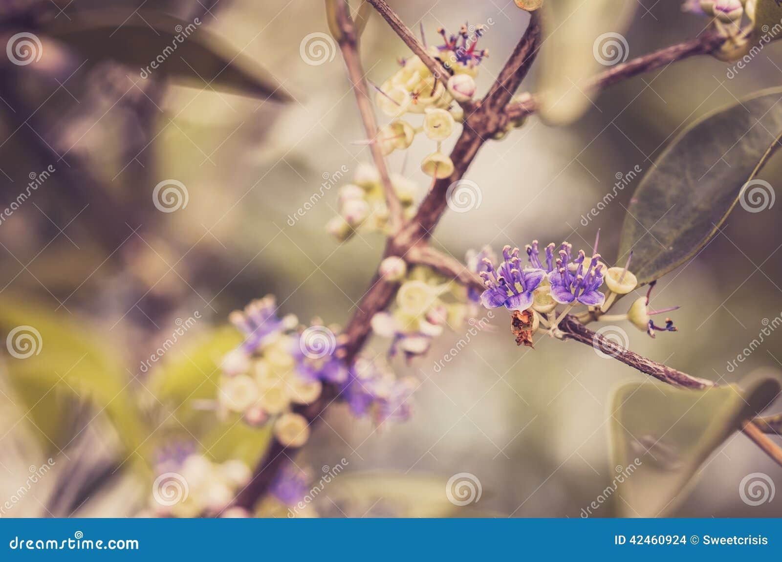 Wenig Blumenweinlese
