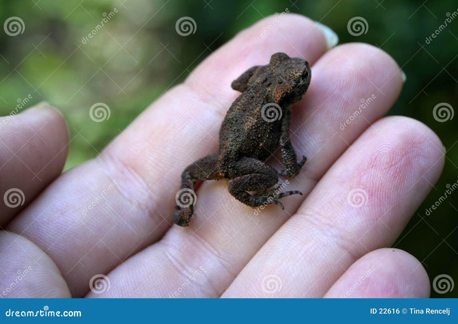Wenig Froggy