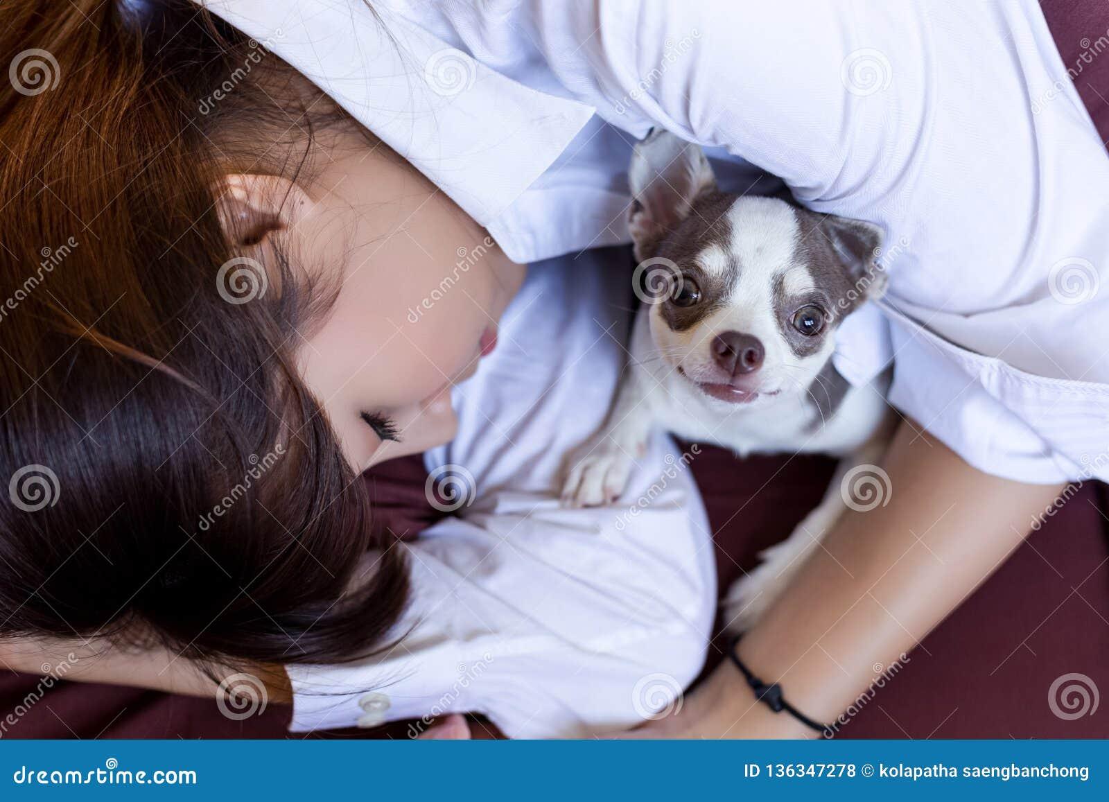 Wenig Hund schützt ihren Eigentümer während hübsches asiatisches Frauenschlafen