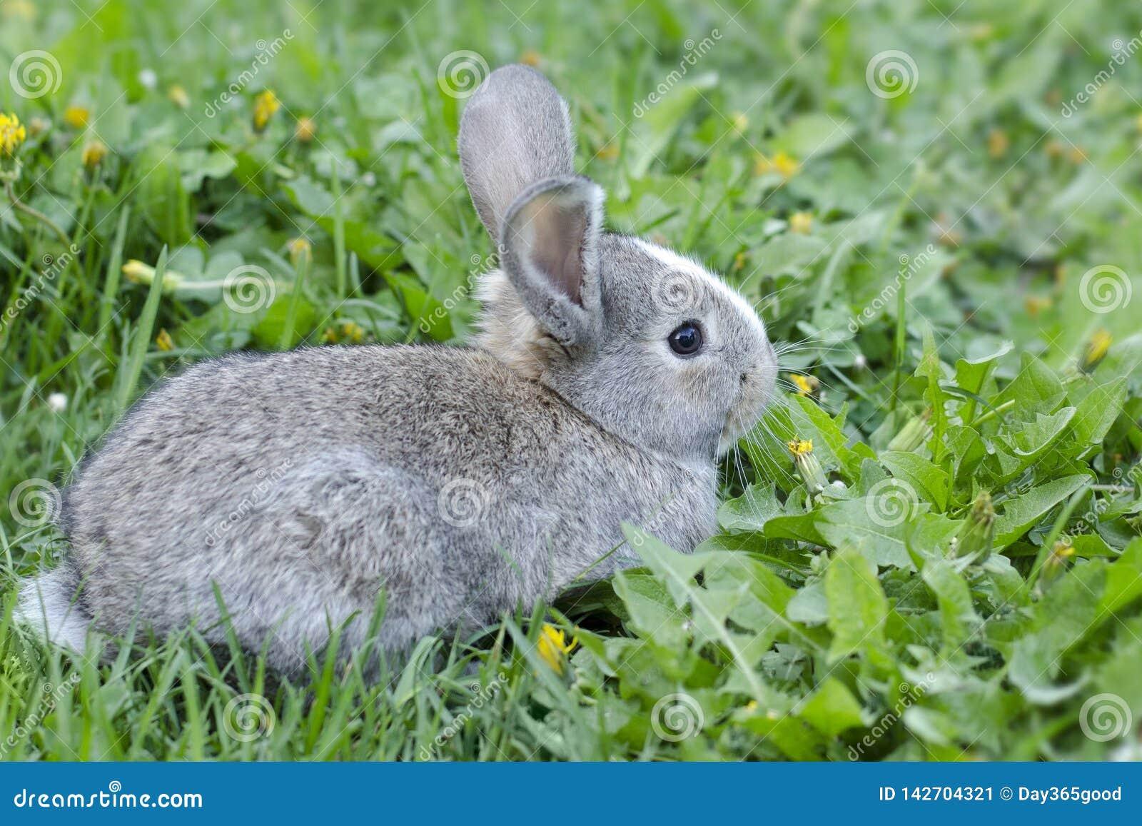 Wenig Kaninchen im grünen Gras Häschen in der Wiese Hase sitzt im grünen Gras