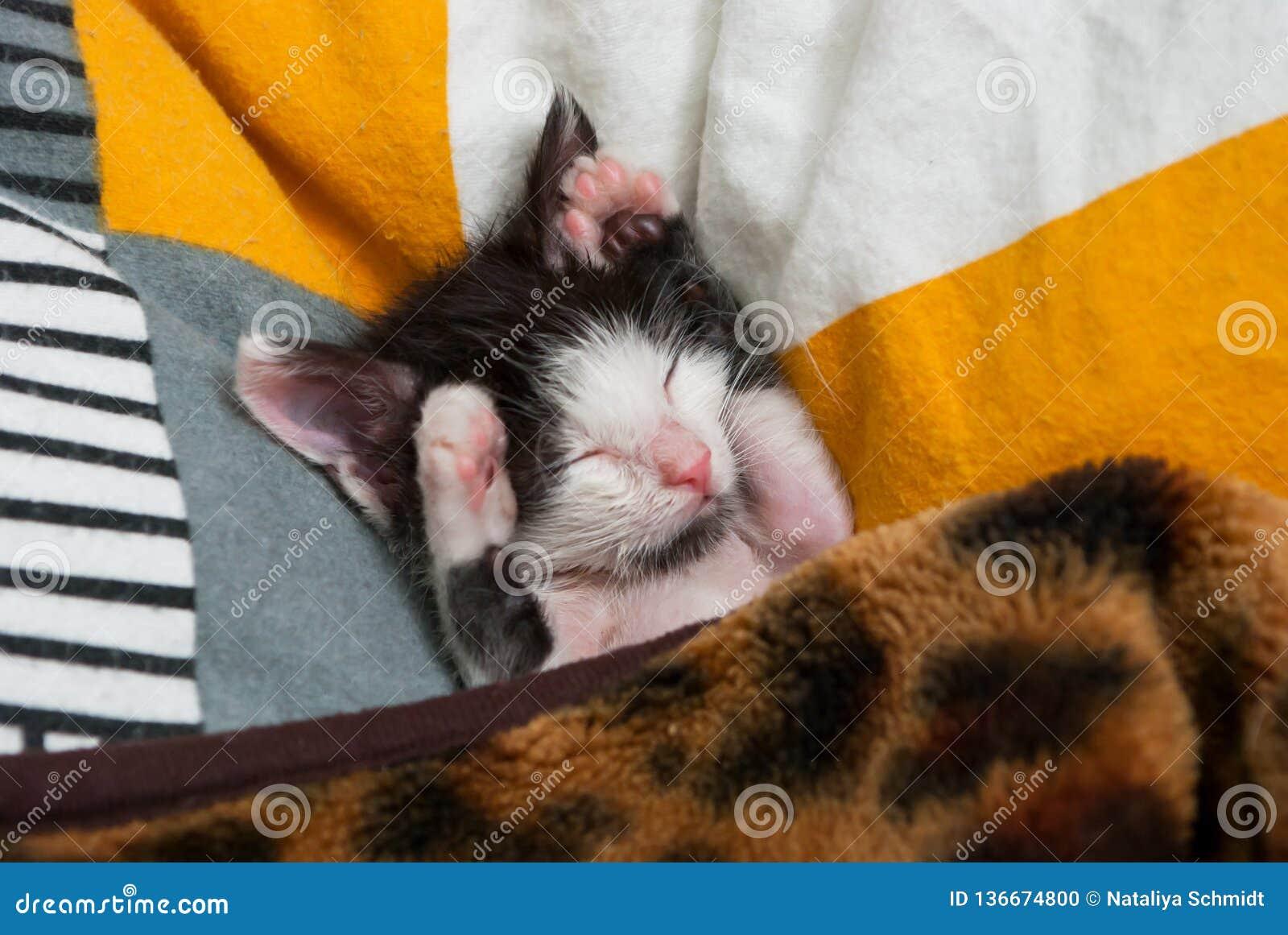 Wenig Miezekatze, die auf dem Kissen schläft