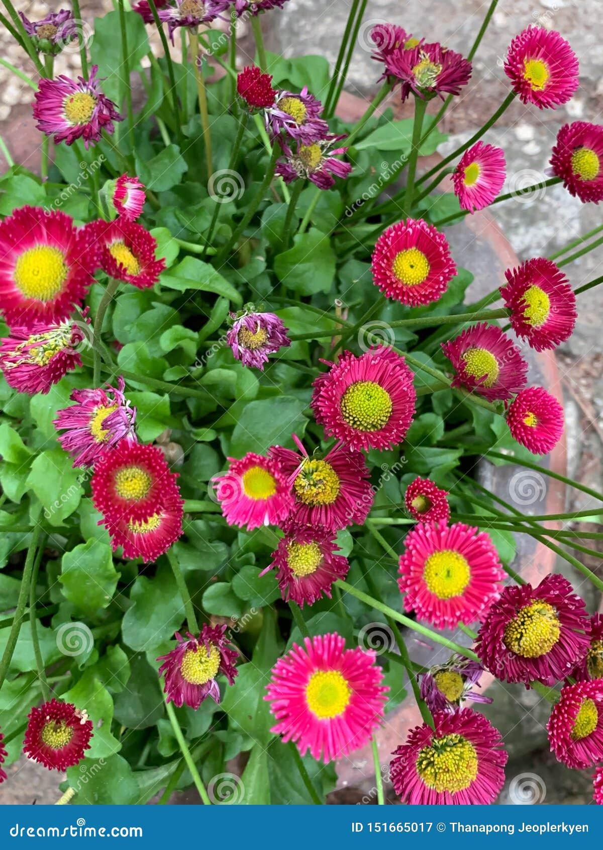 Wenig rosa Blumenhintergrund
