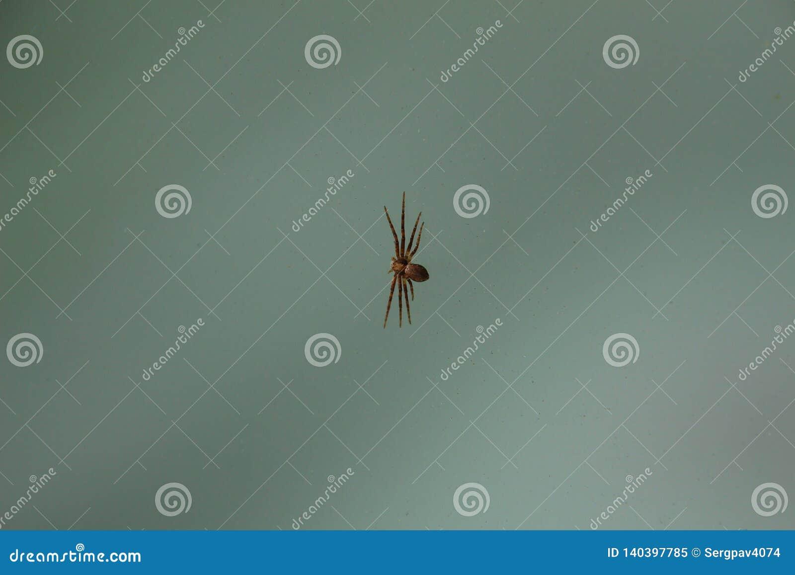 Wenig Spinne auf Klarglas