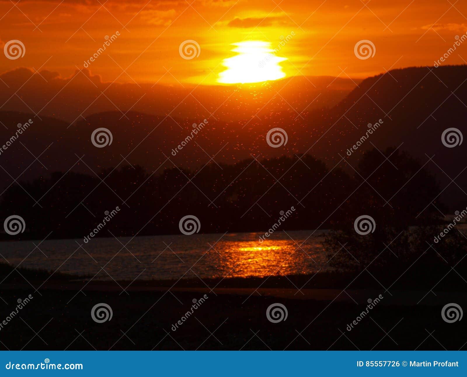 Wenige Fliegen im Sonnenuntergang
