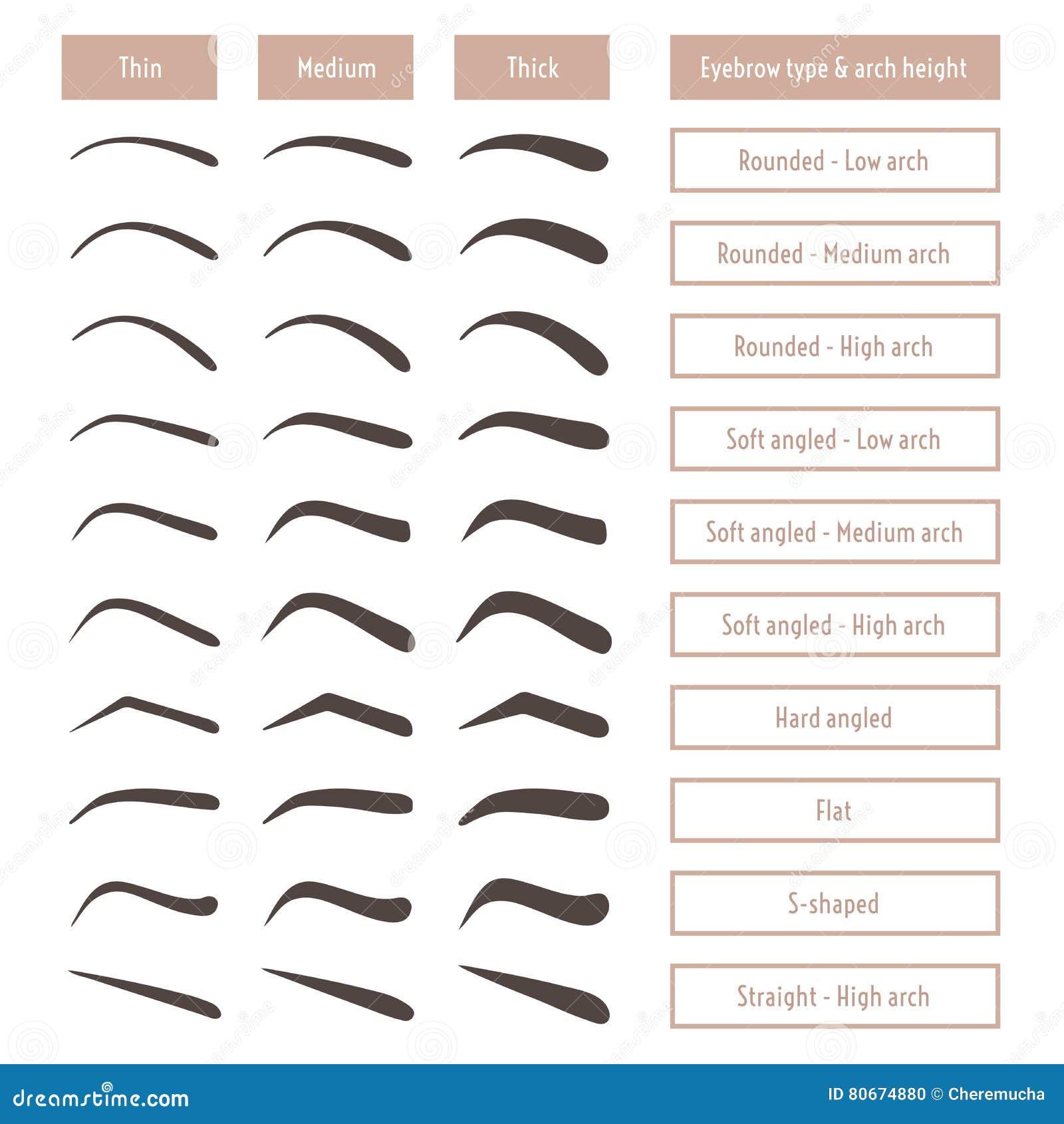 Wenkbrauwvormen Diverse browtypes Vectorlijst met wenkbrauwen en titels