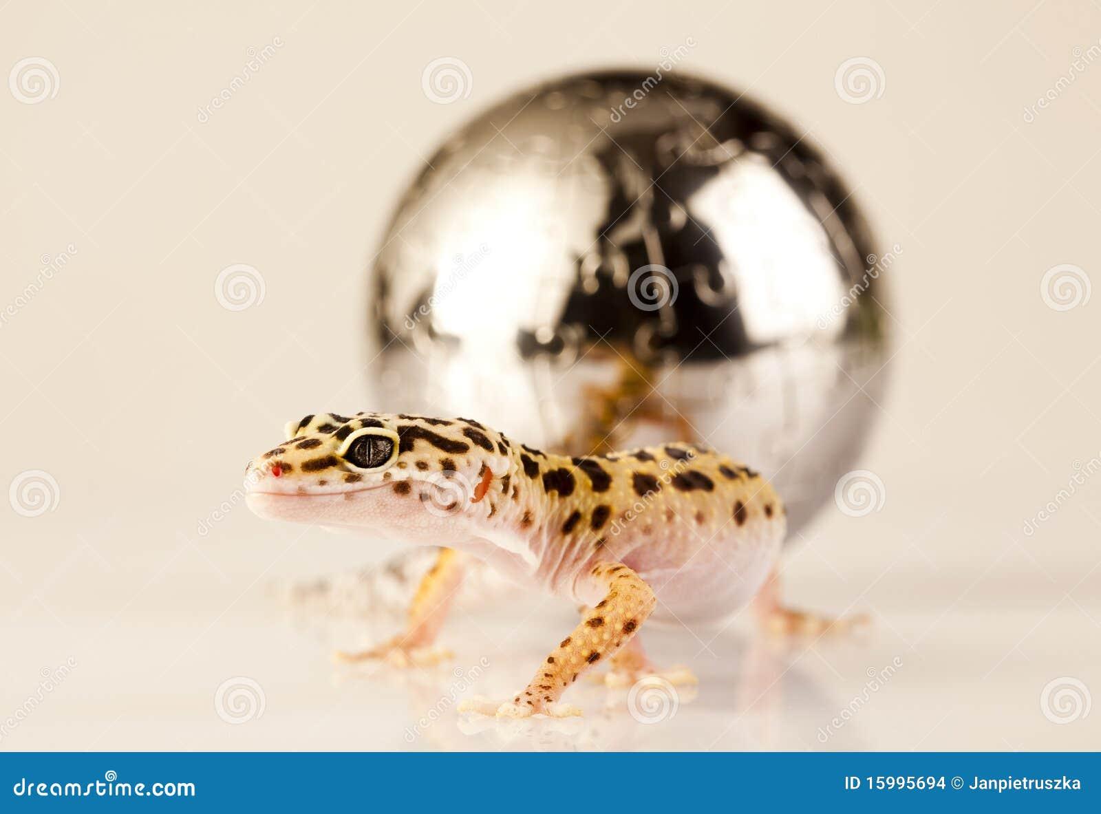 Wereld in gekko