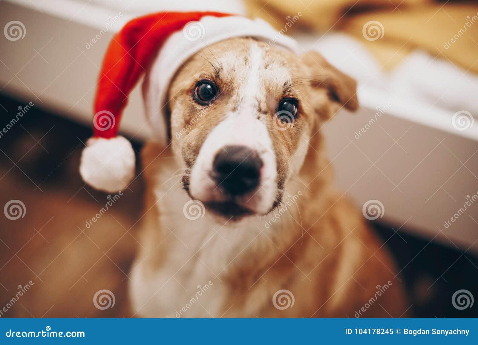 Wesoło boże narodzenia i szczęśliwy nowego roku pojęcie śliczny pies w Santa brzęczeniach
