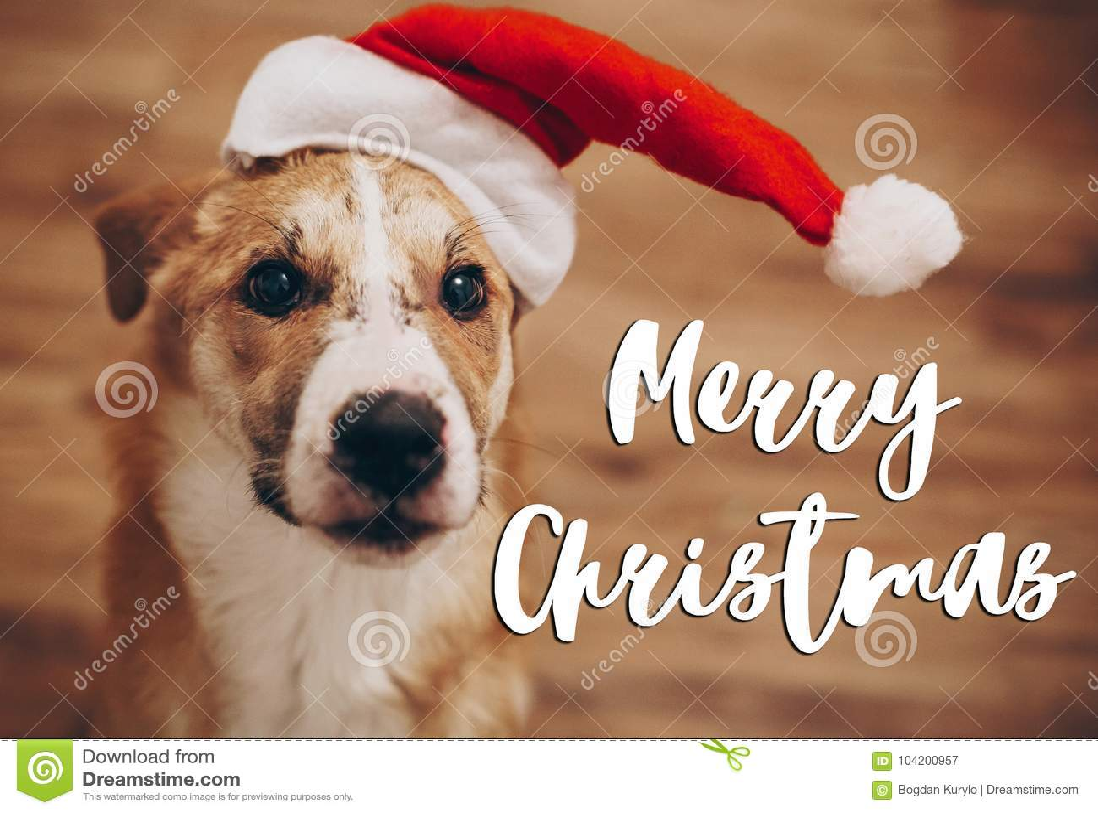 Wesoło boże narodzenia teksty, sezonowy powitanie karty znak pies w Santa