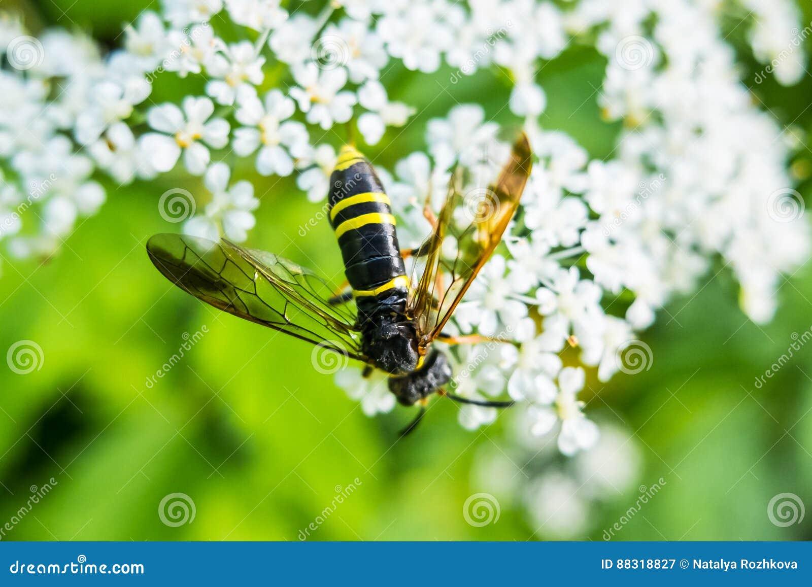 Afbeeldingen Bijtende Insecten