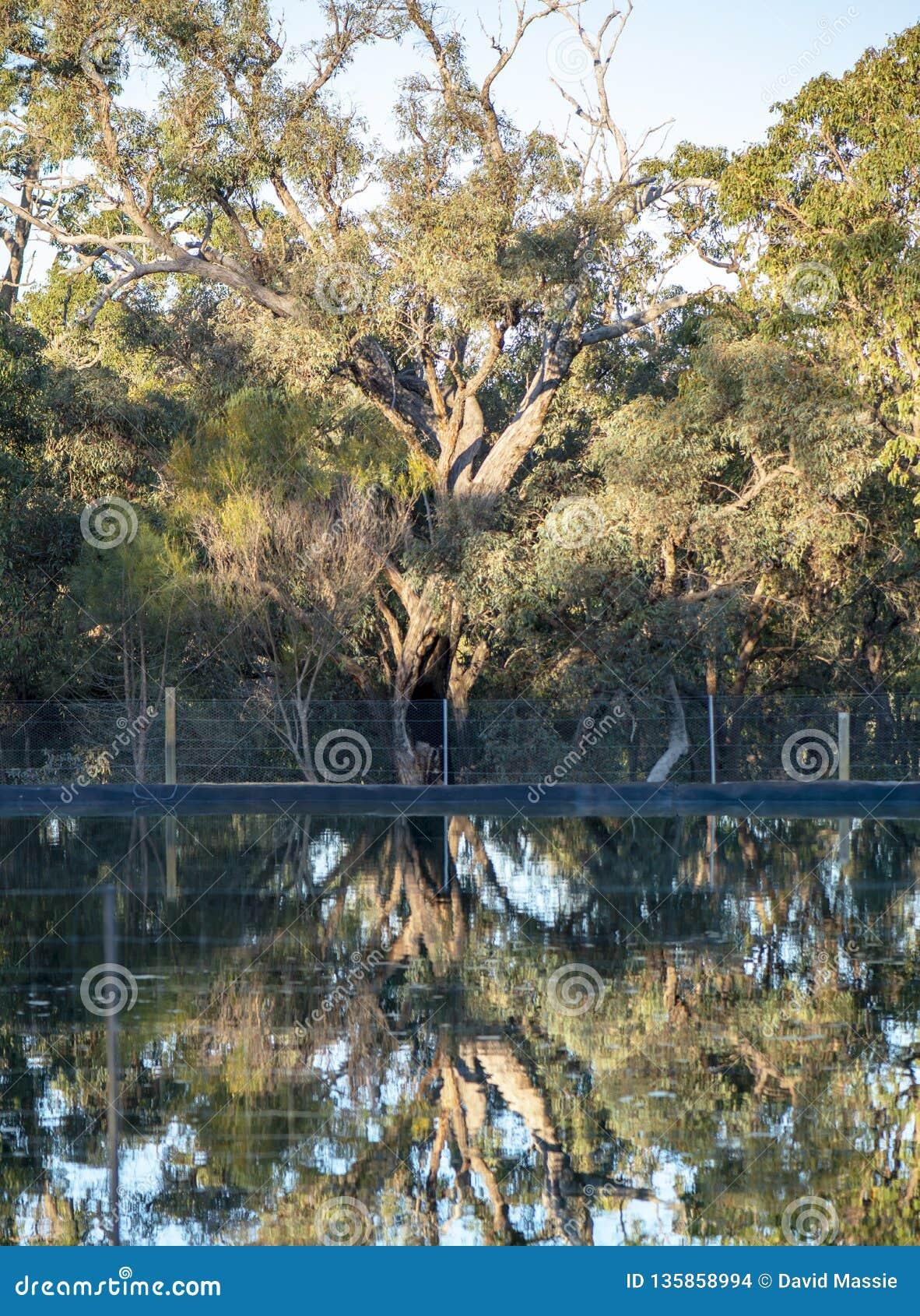 West Australian alinhou a represa