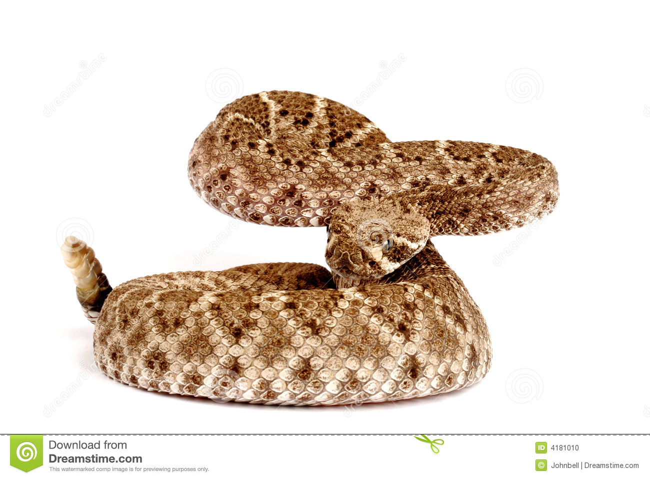 Western Diamondback Rattlesnake Stock Photo - Image of