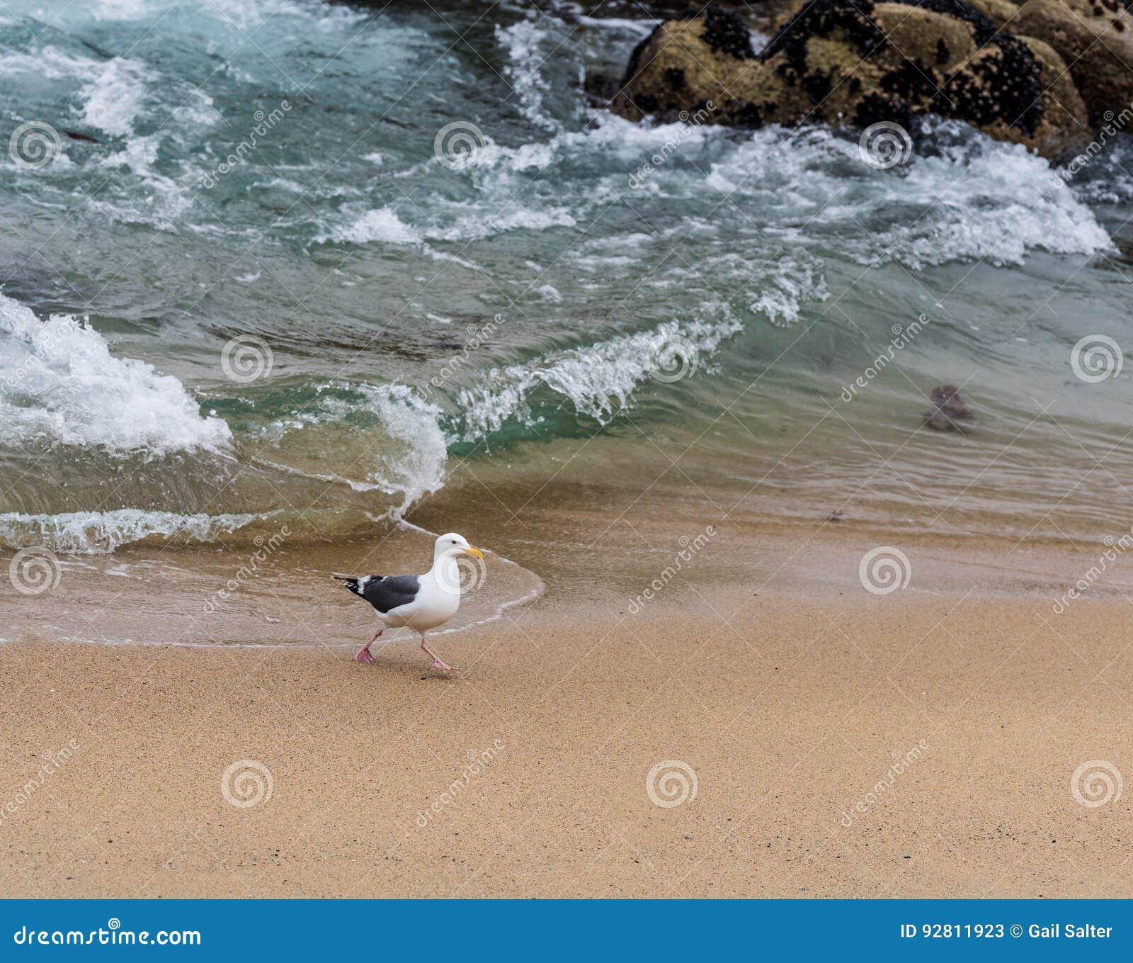 Best Western On The Beach Monterey