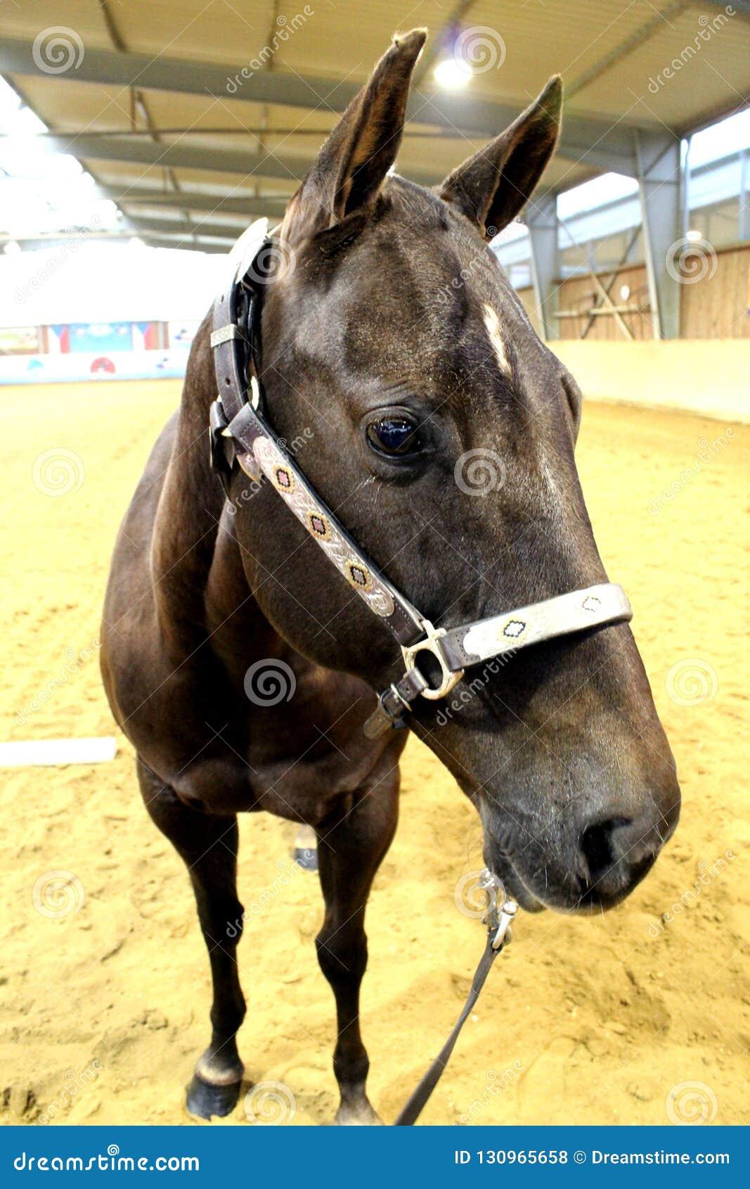 Western Horse Photo Stock Photo Image Of Horse Europe 130965658