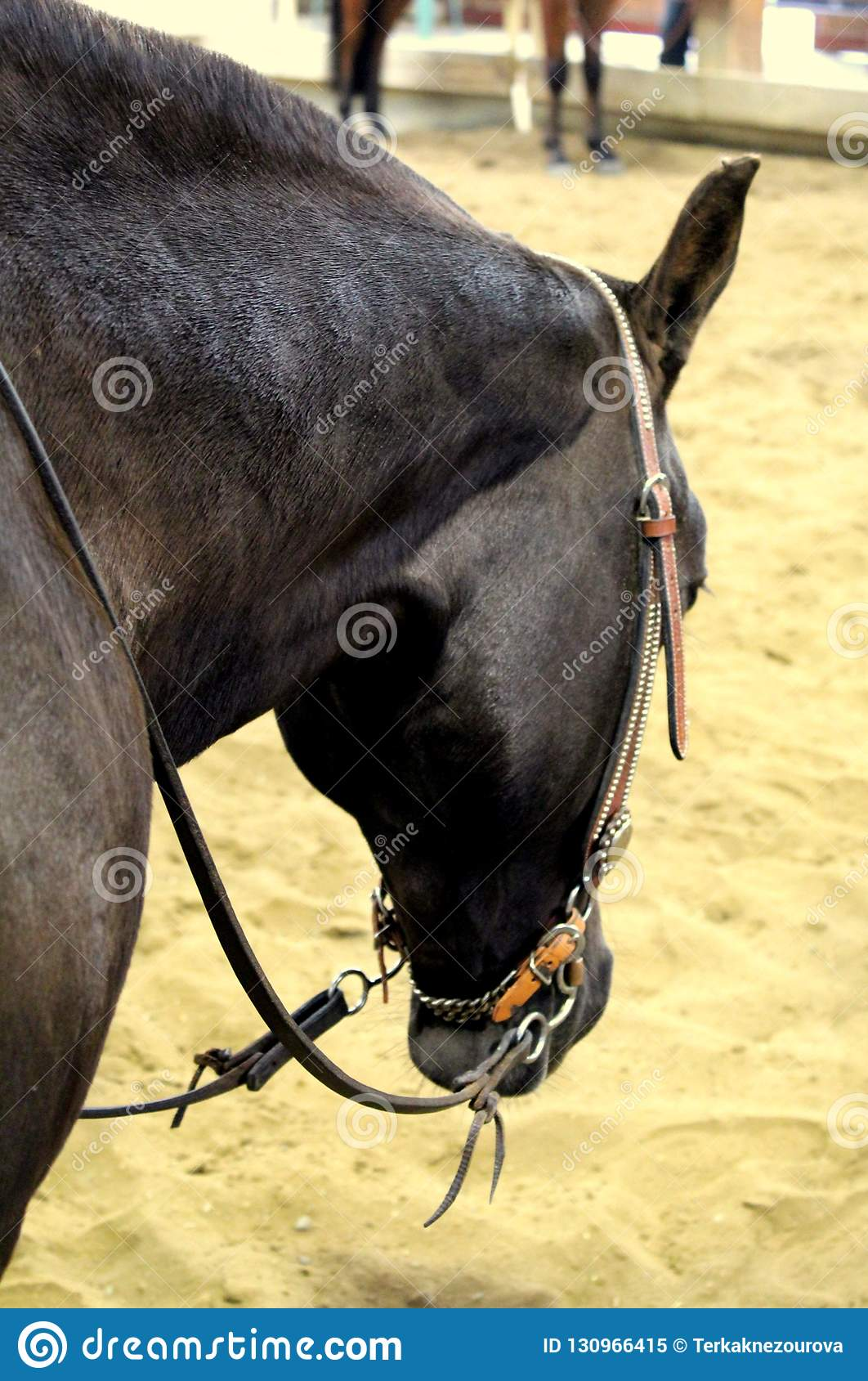 Western Horse Photo Stock Image Image Of Cute Headstall 130966415