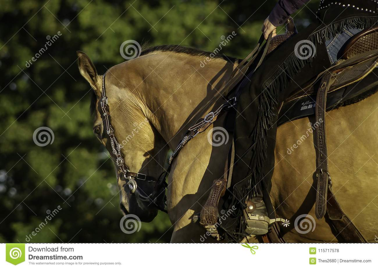 Western Horse With Rider Stock Photo Image Of Carry 115717578