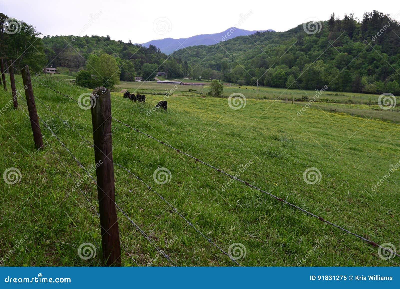 Western NC farm cow pasture