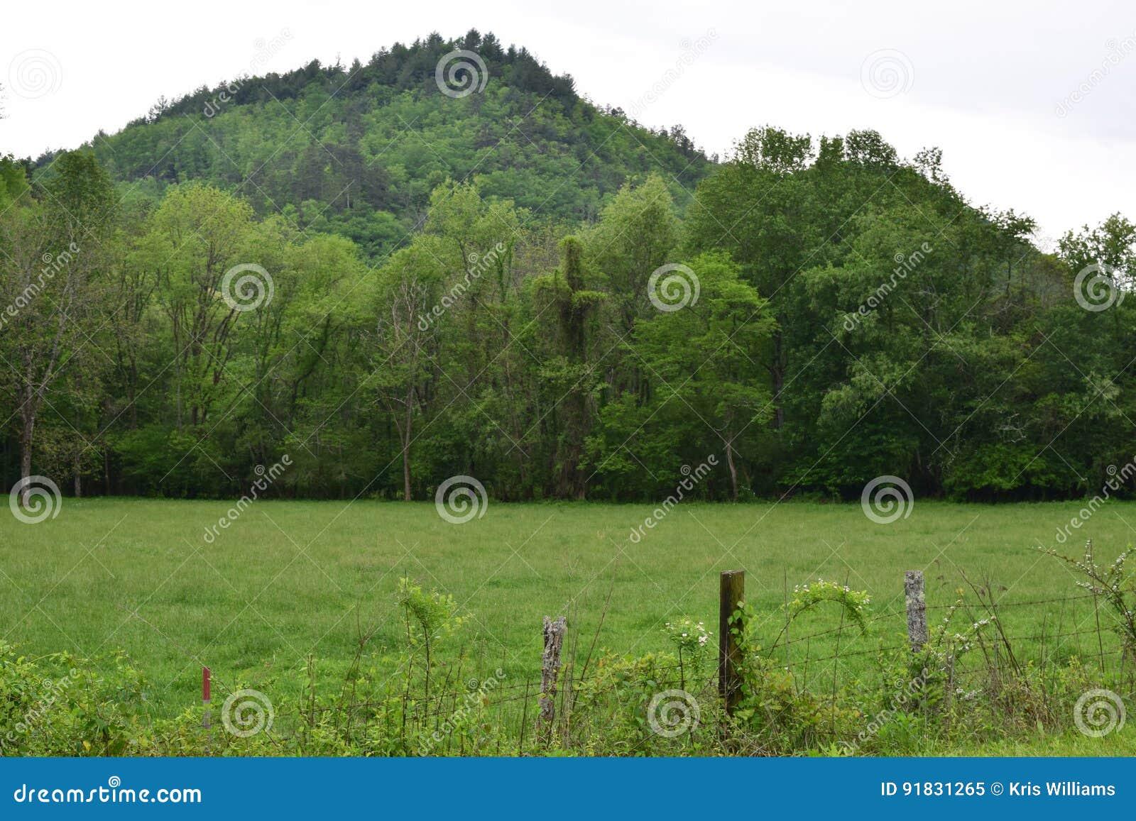 Western NC farm field