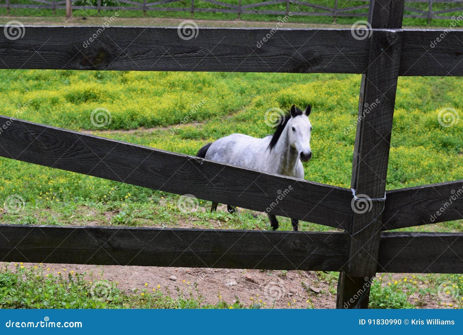 Western NC horse farm and wood fence