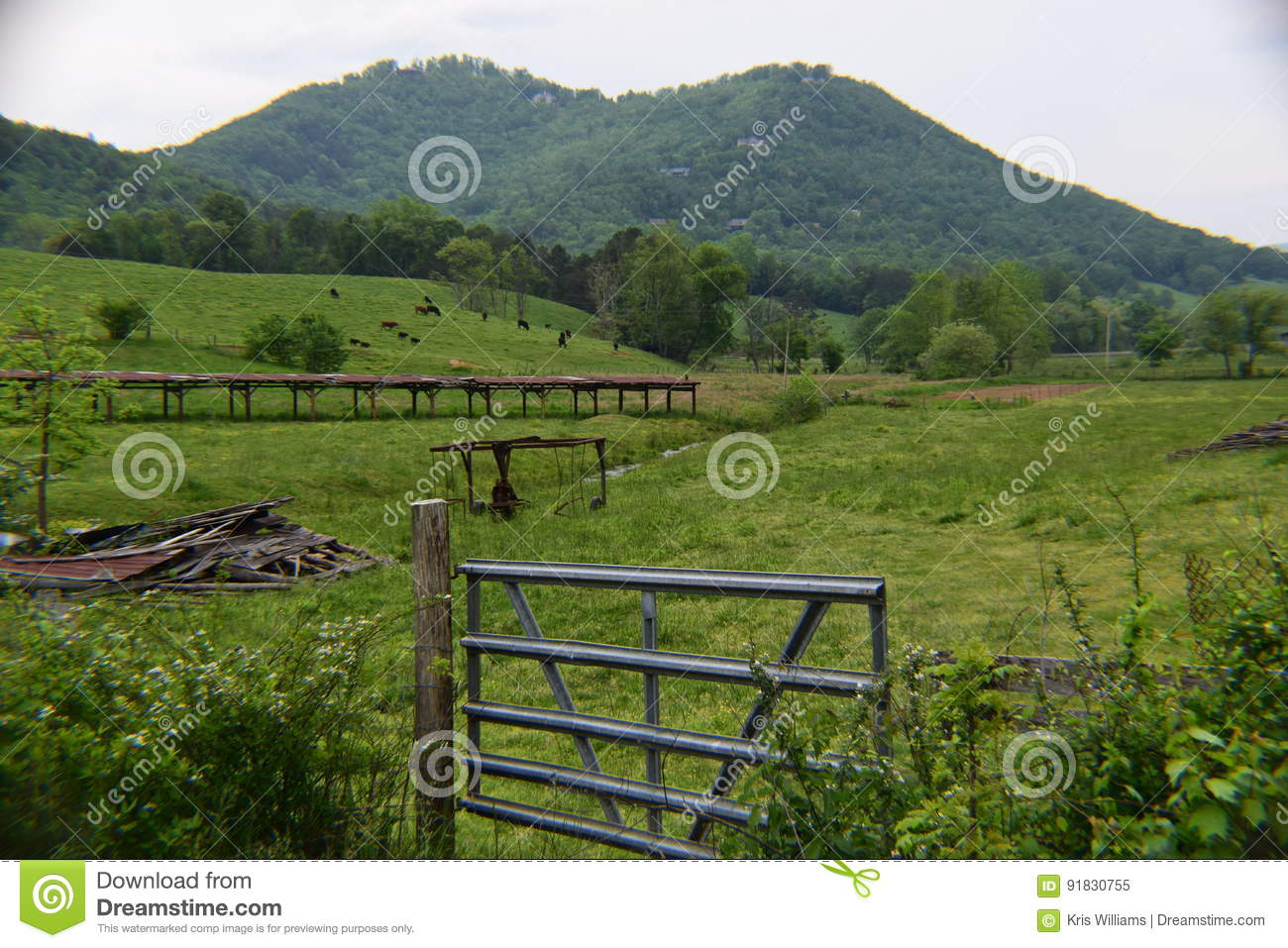 Western NC mountain cow pasture