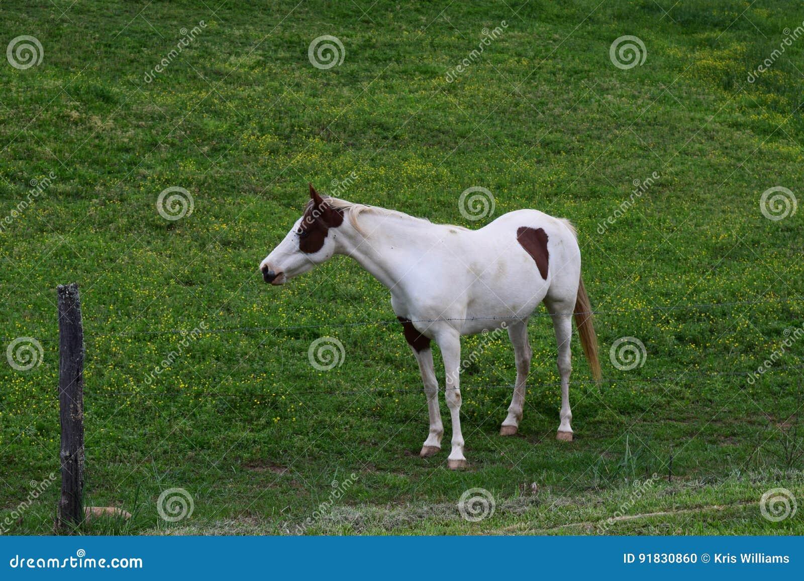 Western NC mountain farm horse