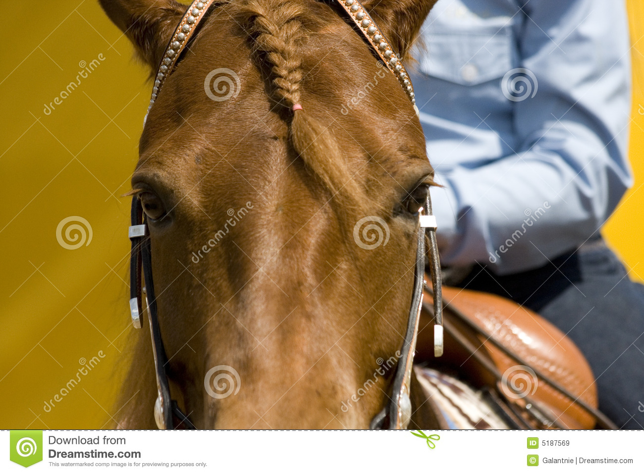 Western Riding Equipment Detail Stock Image Image Of Reins Leather 5187569