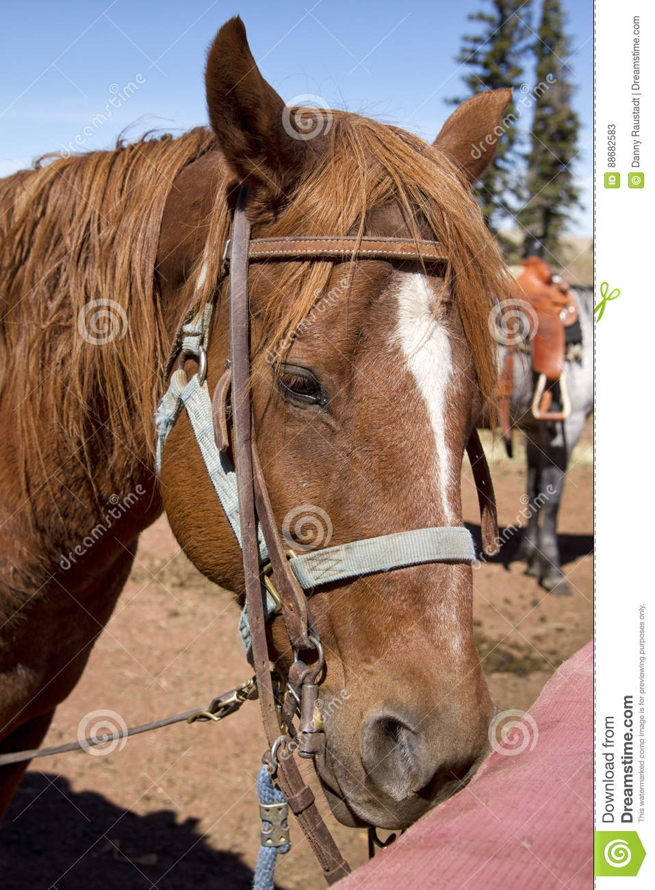 Western Trail Riding Horse At Riding Stable Stock Image Image Of Paying Mountains 88682583
