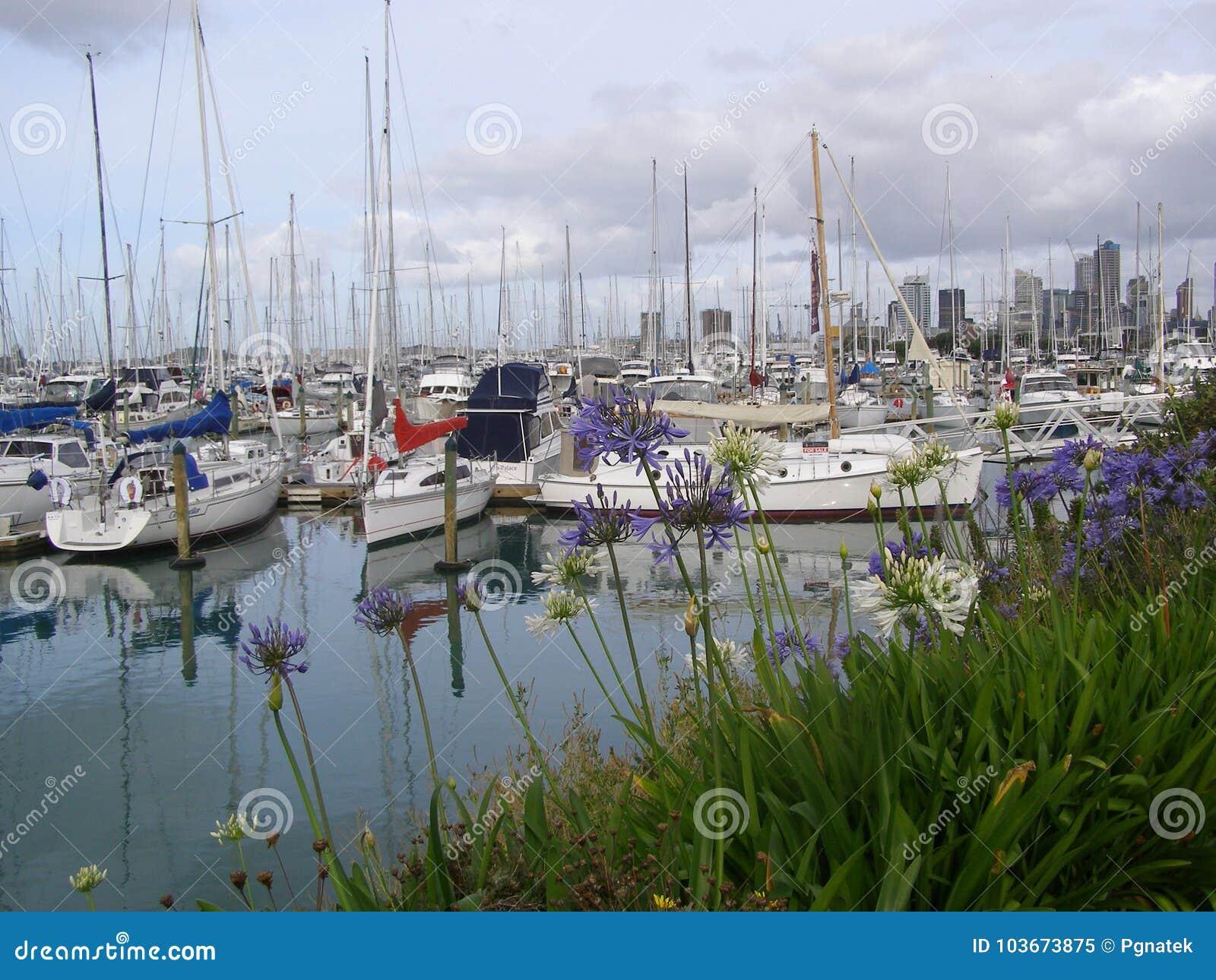 Westhaven Marina Auckland New Zealand