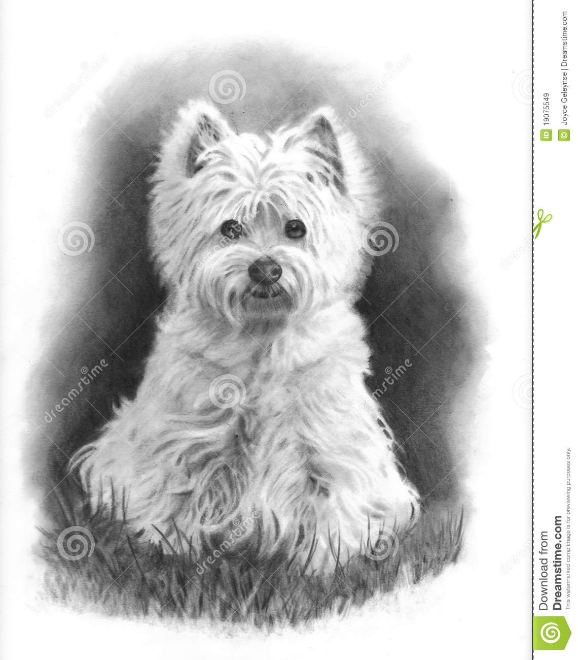 Westie Dog Pencil Drawing Royalty Free Stock Images
