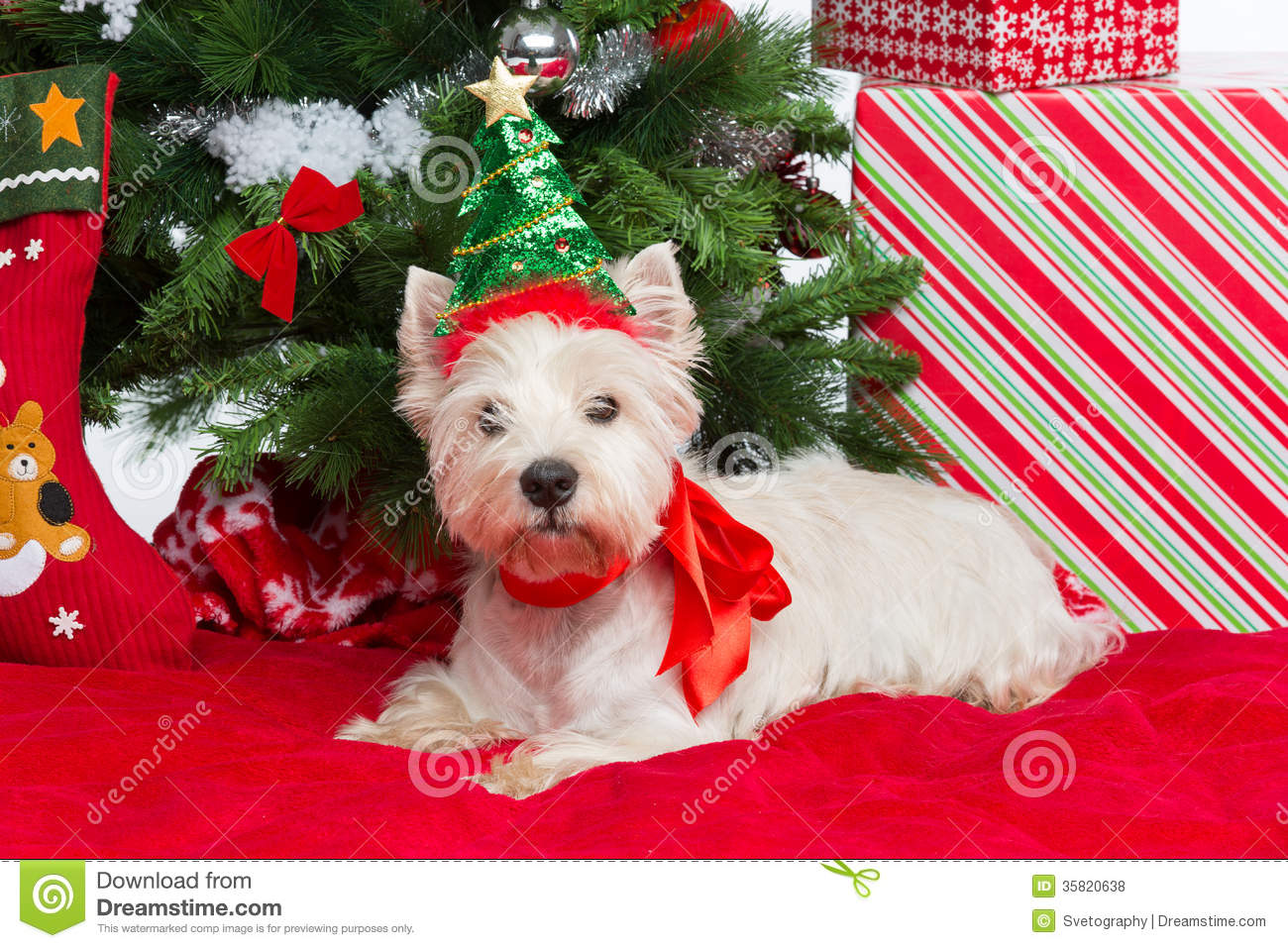 Westie With New Year Tree Stock Photo Image Of Year