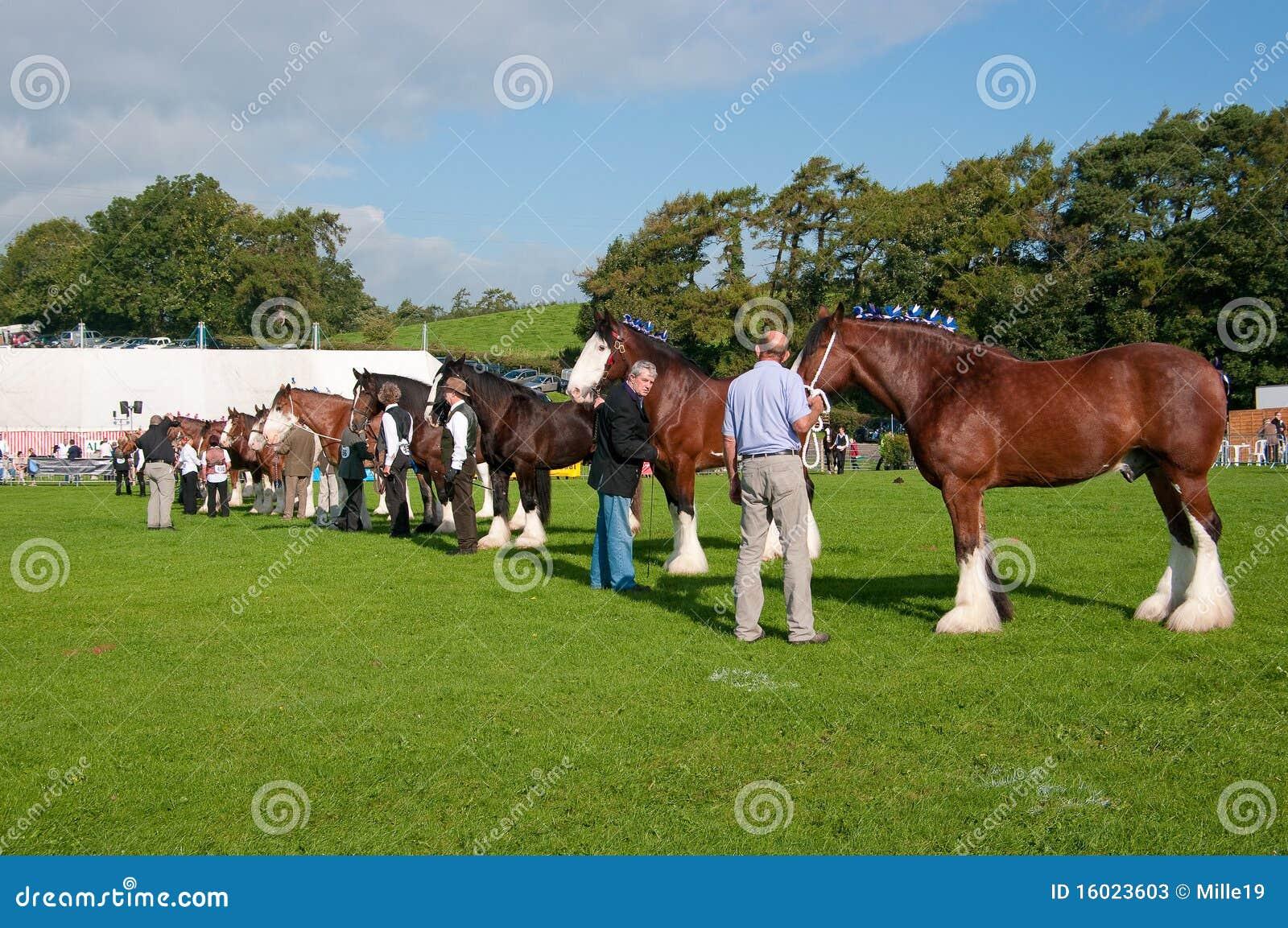 Westmorland för hästgrevskapshow