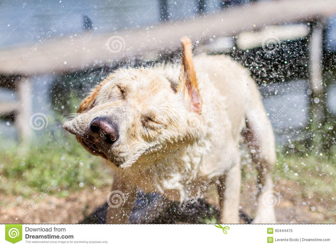 Funny Wet Dog Pictures
