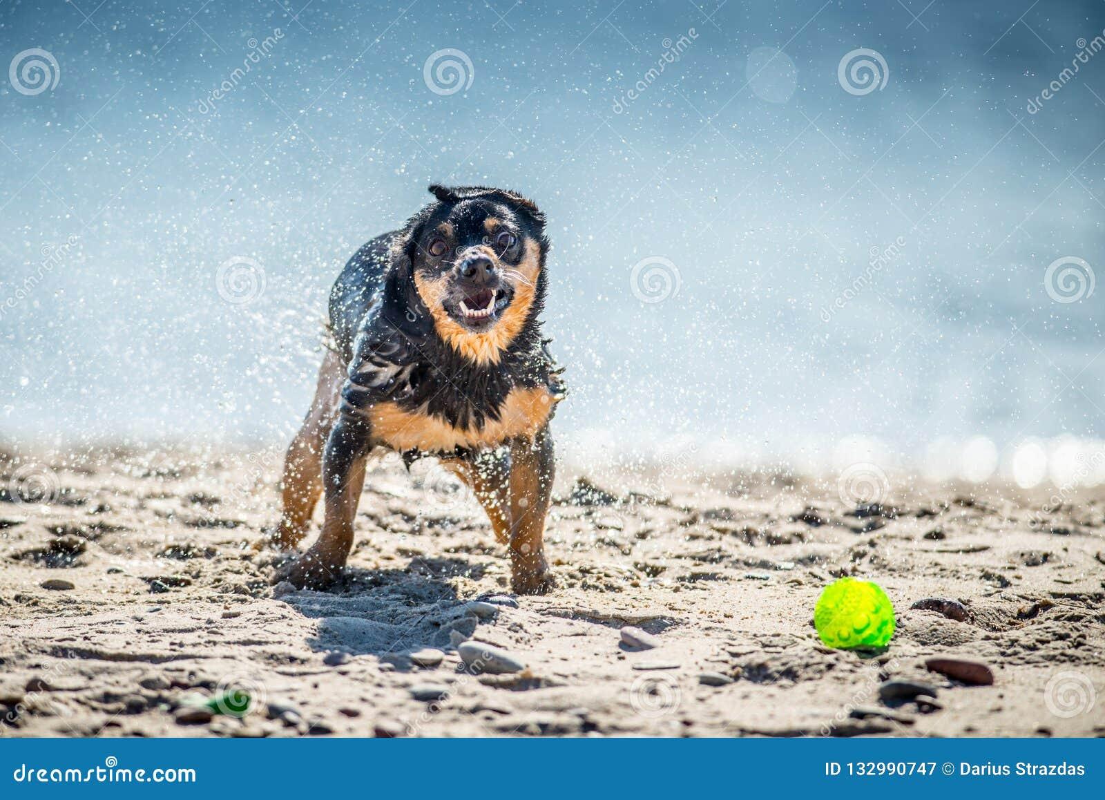 Funny dog games near water, splashing droplets