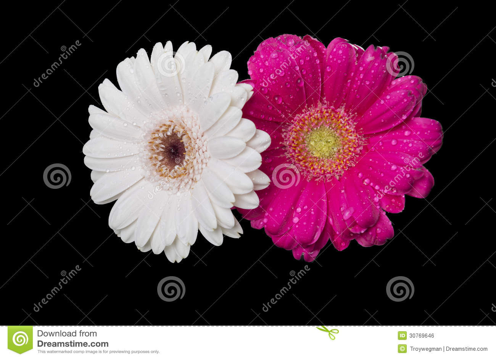 Wet Flowers Royalty Free Stock Image - Image: 30769646