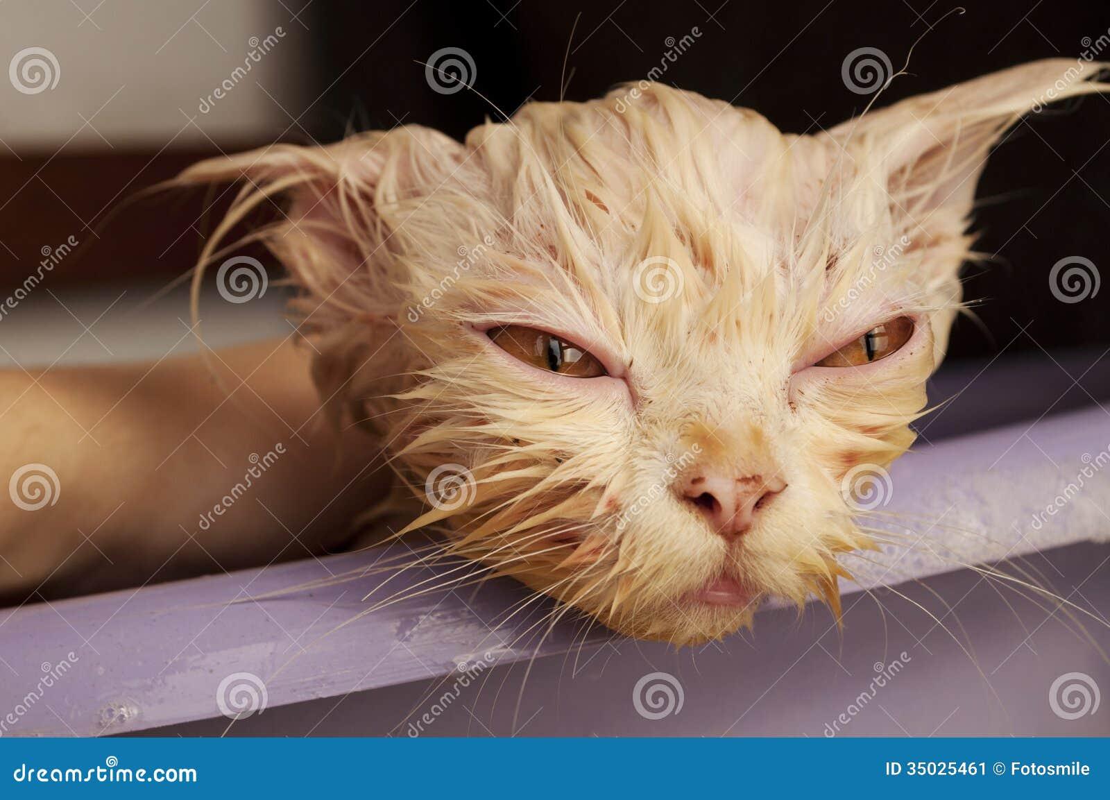 Фото мокрой котенка 13 фотография