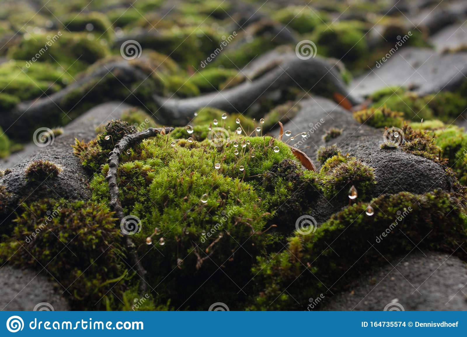 Wet moss on a roof.