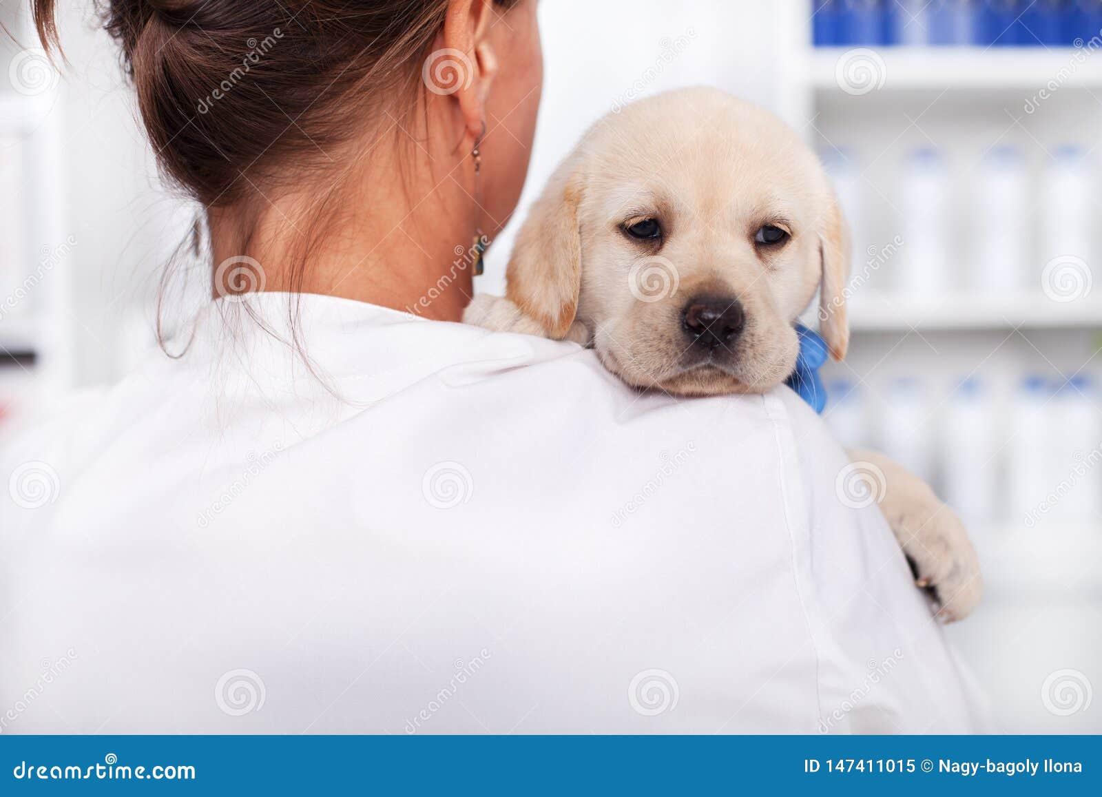 Weterynaryjna lekarka lub opieki zdrowotnej fachowego mienia szczeniaka śliczny pies