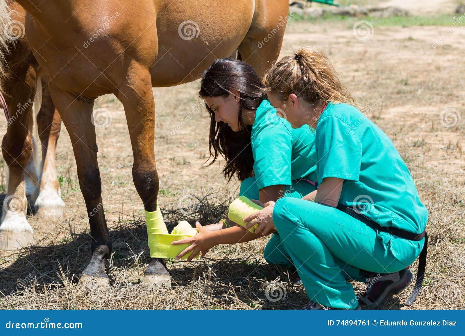 Weterynaryjni konie na gospodarstwie rolnym