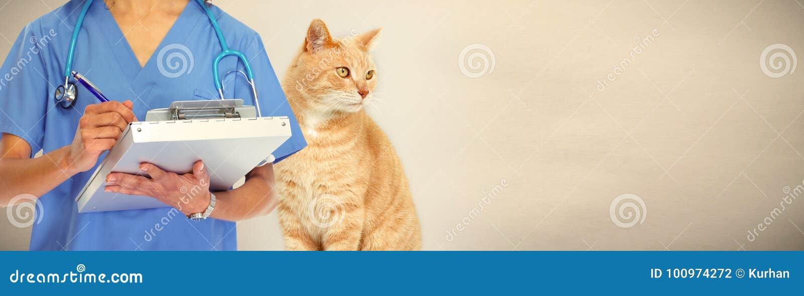 Weterynarz lekarka z kotem w weterynaryjnej klinice