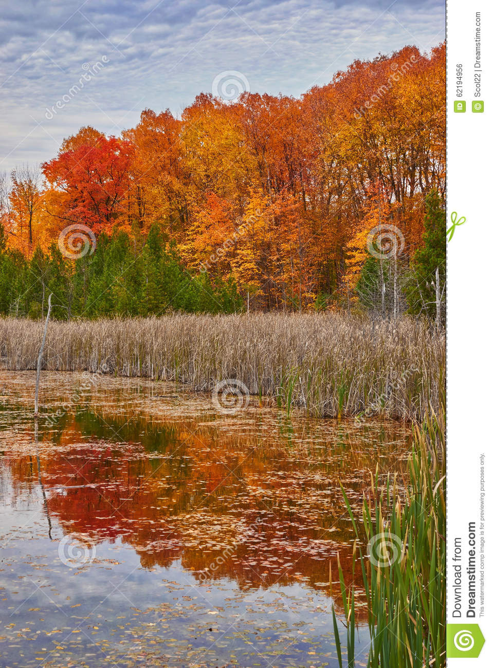 Wetland Forest In Fall Stock Photo - Image: 62194956