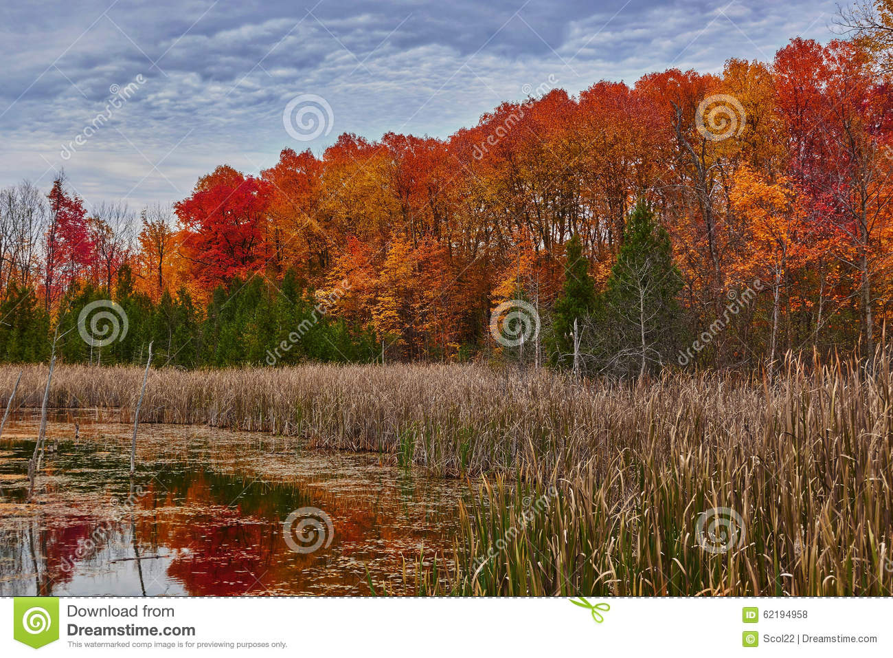 Wetland forest in fall stock photo. Image of green, color ...