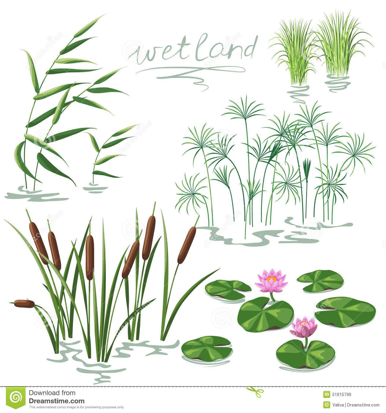 wetland plants set stock vector image 51615799 water lily clipart free water lily pond clipart