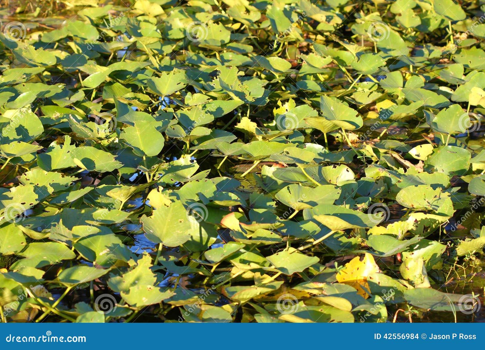Wetland Vegetation in Florida