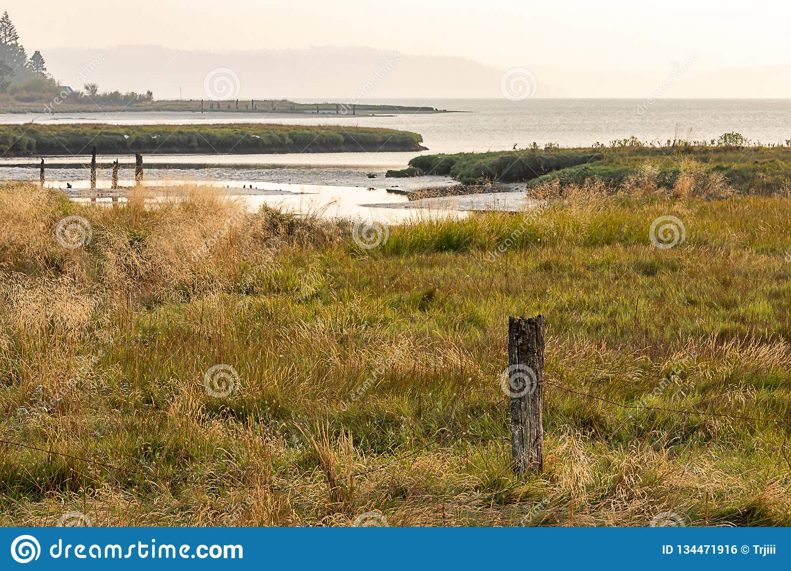 wetlands along the coastline of hood canal