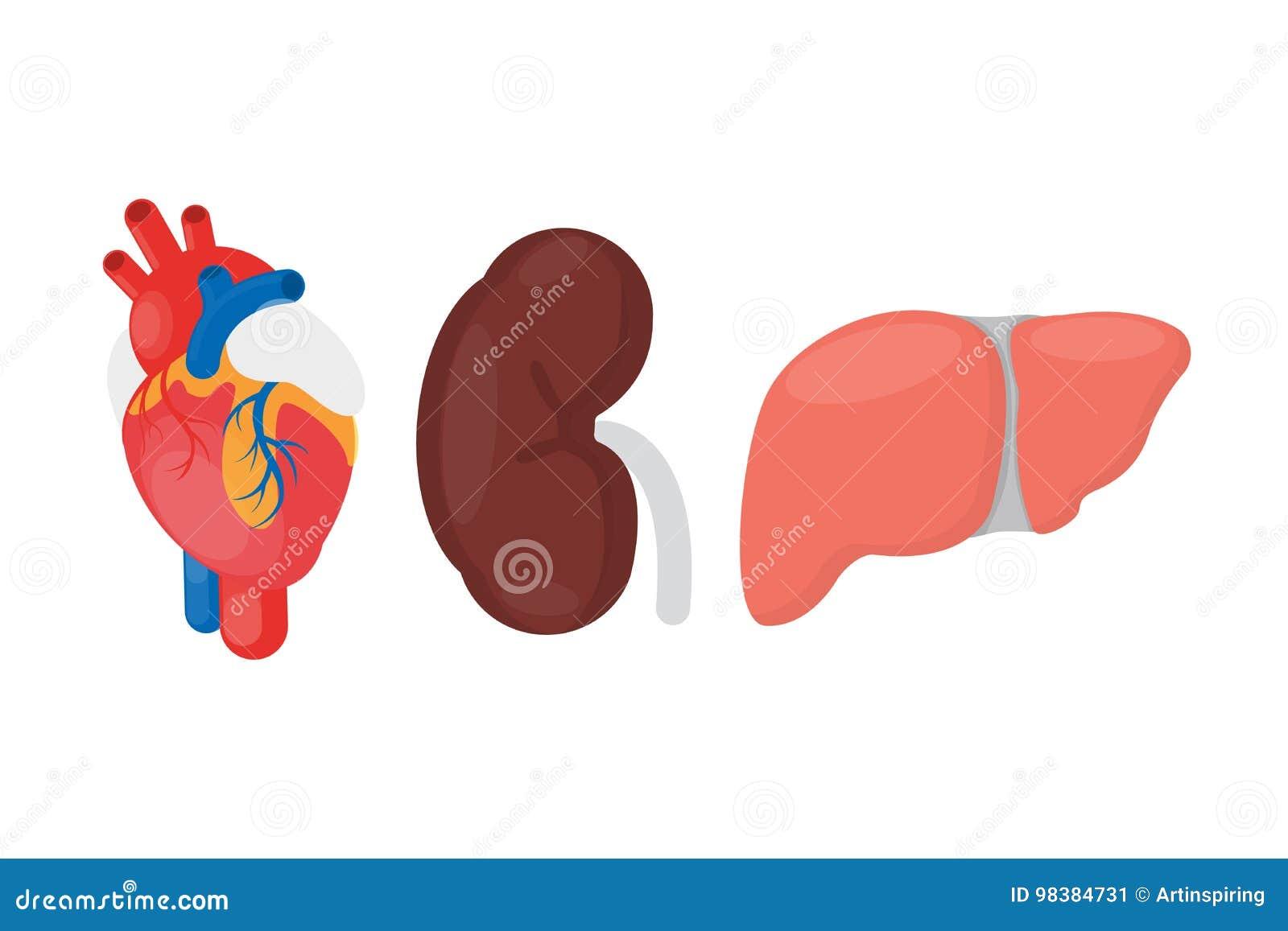 Wewnętrzna organowa darowizna