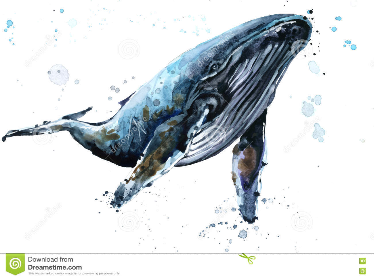 whale humpback whale watercolor illustration stock illustration