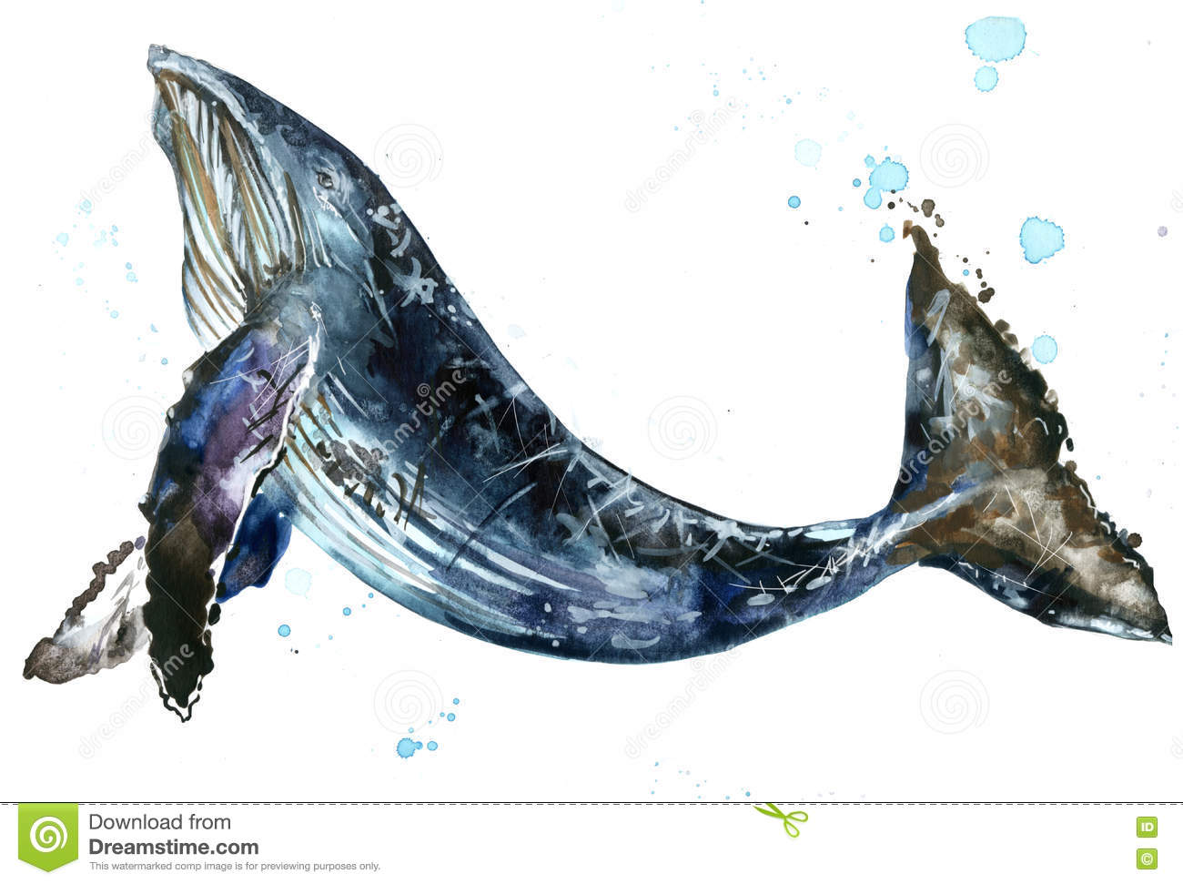 whale humpback whale watercolor illustration stock