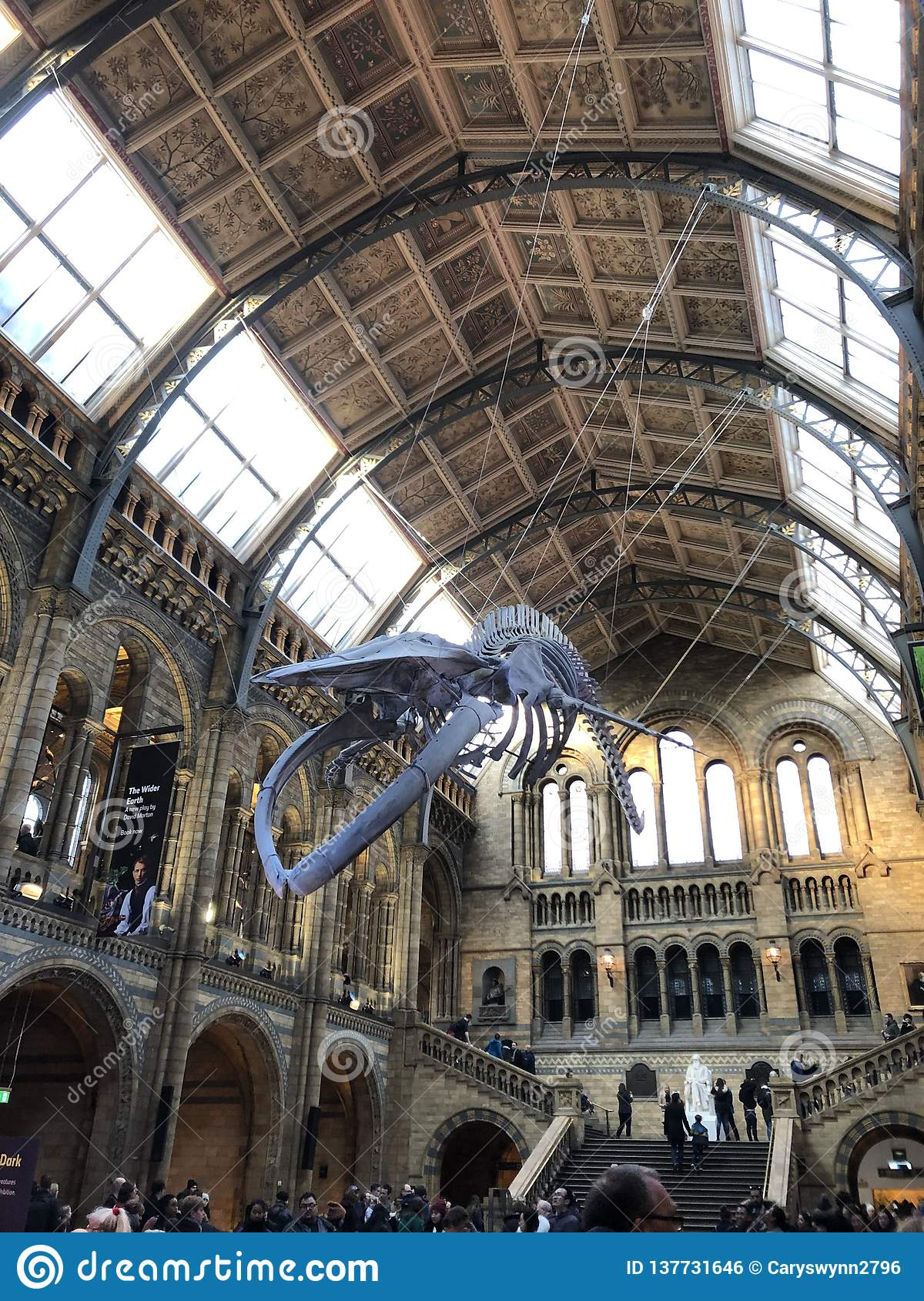 Whale at Natural History Museum